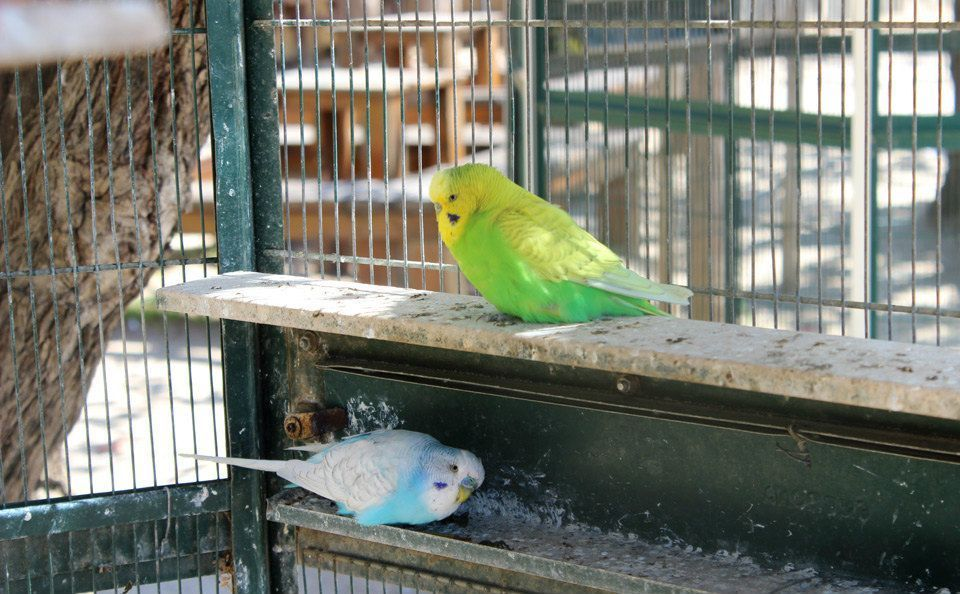 Parakeets and other birds